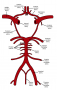 circle_of_willis.png