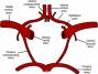 anterior_communicating_artery.jpg