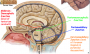 pontomesencephalic_junction.png