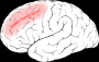 middle_frontal_gyrus.png